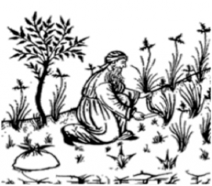 L'erba della memoria